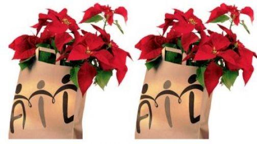Solidarietà: Ail in piazza con le stelle di Natale per raccogliere fondi