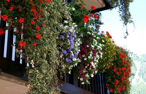 Telese, 'Balconi in…fiore': decretati i vincitori