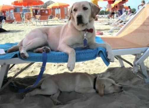 Estate: in viaggio con gli animali, consigli utili