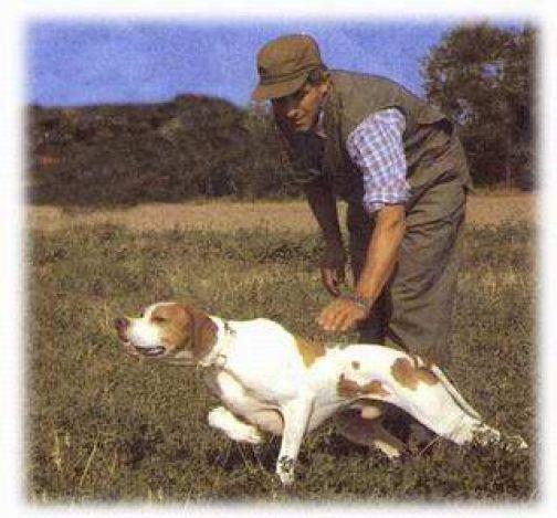 Stagione venatoria 2014, approvata l'attività di addestramento dei cani da caccia