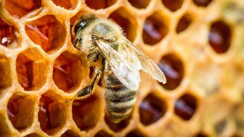 Apicoltori, finanziamento per l'acquisto di arnie per la lotta alla varroa.