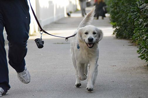 Sant'Agata, ordinanza sindacale in materia di igiene e sanità: Obblighi per i proprietari di cani.