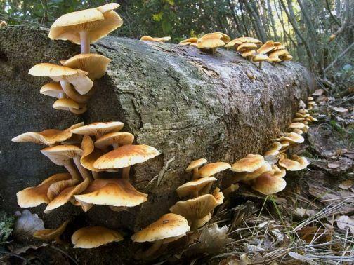 Comunità Montana Fortore, raccolta funghi: due corsi di aggiornamento