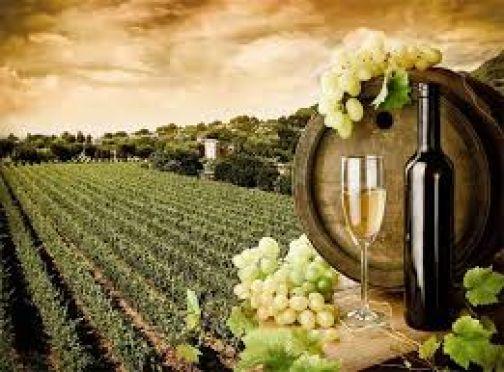 A Bruxelles candidatura a Città Europea del Vino del Territorio 'Sannio Falanghina'