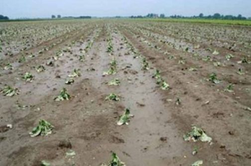 Gestione del rischio in agricoltura, Bando della Regione