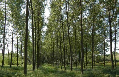 Provincia, approvato il Piano 2019 per la Forestazione