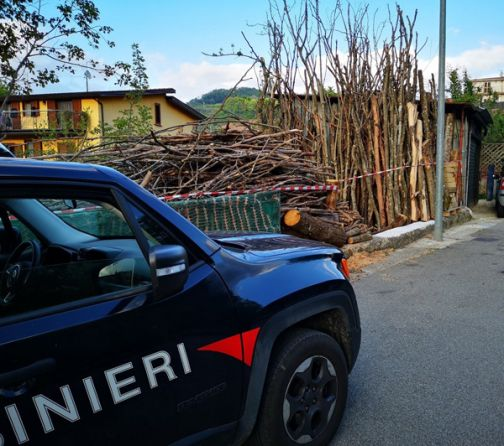Rubava piante nel Parco del Partenio, nel territorio di Pannarano: una persona denunciata