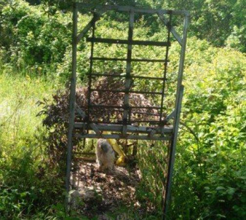 San Nicola Manfredi, i Carabinieri Forestali sequestrano trappola per fauna selvatica