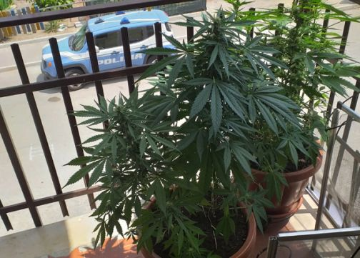Benevento, piante di marijuana sul balcone: arrestato dalla Polizia