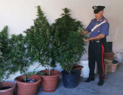 Pontelandolfo, piante di cannabis in casa: denunciati padre, madre e figlio