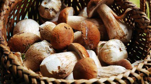Cusano, Sagra dei funghi: al via la quarantunesima edizione