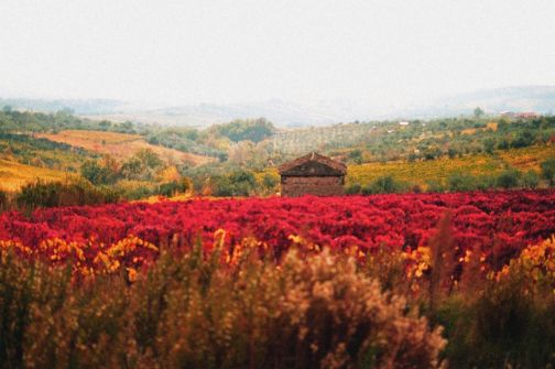 A Telese iniziativa per promuovere e stimolare il turismo del vino nel Sannio
