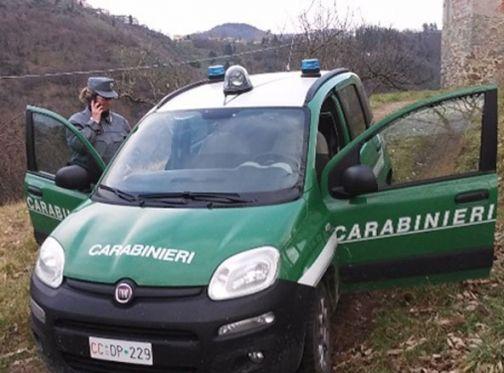 Carabinieri Forestale, sequestrate 20 tonnellate di pellet contenente sostanze molto pericolose