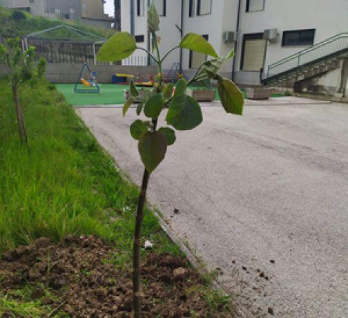 Guardia Sanframondi, il Circolo Viticoltori pianta alberi, in sicurezza!