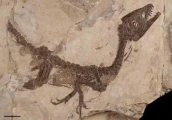 ciro_dinosauro